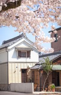 まもなく桜満開&癒しDAY