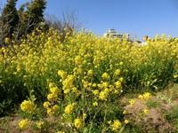 春到来 花いっぱい♪