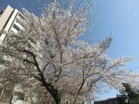 春.毎日・・・