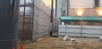 施設新築工事足場-組立て‼︎