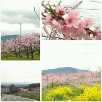 猿投の桃畑と給食セット