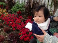 子ども連れての散歩に最適!西山公園のバラ(豊田市西山町) 2013/11/10 20:53:24