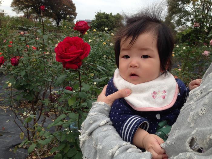 子ども連れての散歩に最適!西山公園のバラ(豊田市西山町)