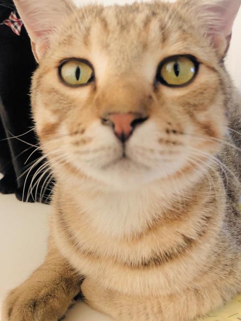 新米猫さんのご紹介