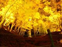 香嵐渓の今の様子がわかる、ブロガーさんの2015年ブログ記事をご紹介