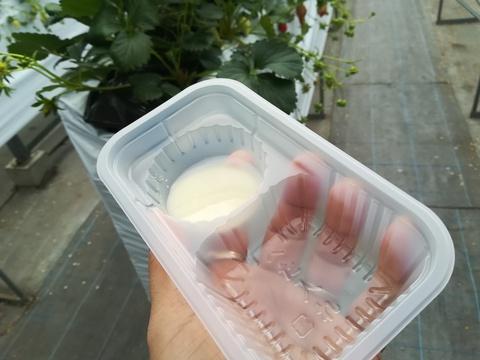 イチゴ狩りに行きました(^-^)/