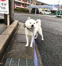 嫌なんだってば!!  (ももたろう:犬)