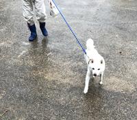 雨の散歩…。