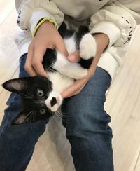 (保護猫)すくすくと成長! 2018/12/04 22:00:45
