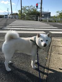 ももたろう(犬)と散歩・・・♪