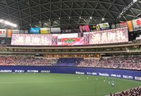 野球観戦…!