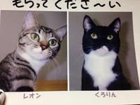 こんニャちわ(ΦωΦ)(ΦωΦ)猫姉妹の里親♡募集中♡