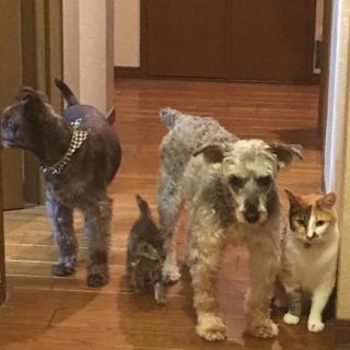 相棒4台♥♥♥♥愛犬2匹+愛猫2匹=4匹