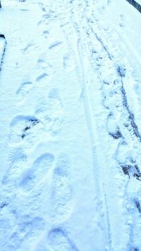 今年も雪だるま作り♪with 知らないおばさま