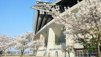 豊田スタジアムも満開♪