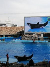 名古屋港水族館にて 写真いろいろ