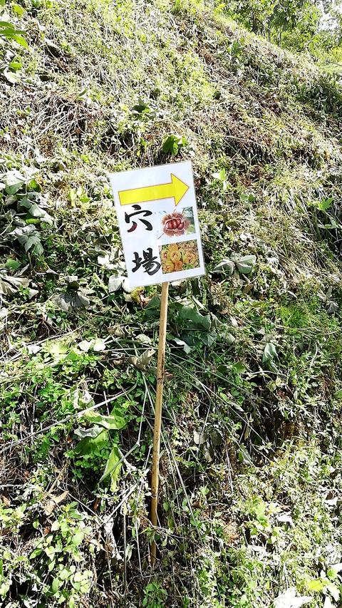 豊田市で秋の味覚狩り♪足助みたち栗園