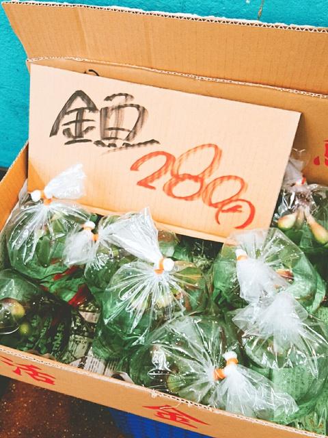 市民市場【ピカイチ梅坪店】、本日の鮮魚コーナー♪ (豊田市)