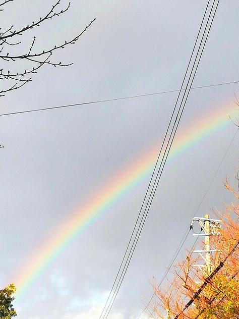 虹、見えましたか