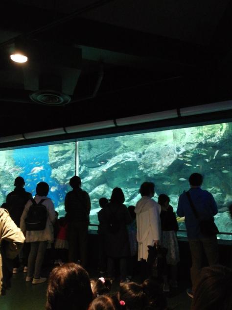 碧南海浜水族館へ行ってきました(碧南市)