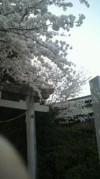2012春便り