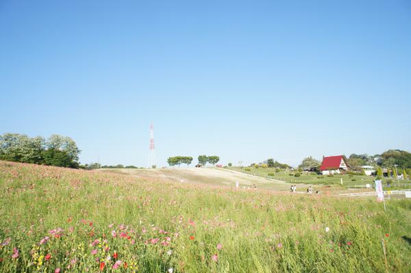 今はひなげしの迷路!ひさしぶりの愛知牧場!混んでた。。