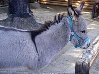 のんほいパーク(愛知県豊橋市)で、カワイイ動物の写真撮ってきた! 2007/09/16 18:24:47