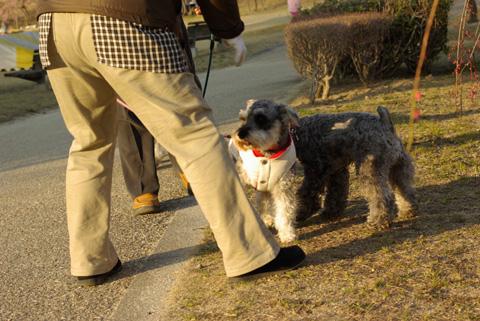 平芝公園梅祭り④ 番外編(お犬様)