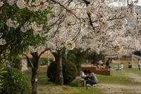 三好公園の花見散歩。一人ってのもなかなかいいもの。 2008/04/06 00:25:03