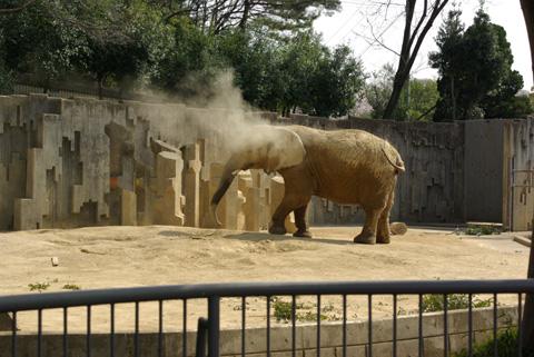 東山動物園のぞうの写真