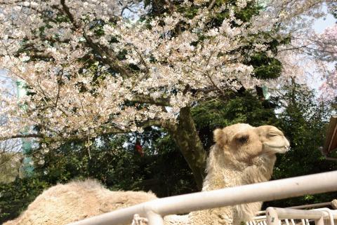東山動物園① 近いし、入園料が安い←!