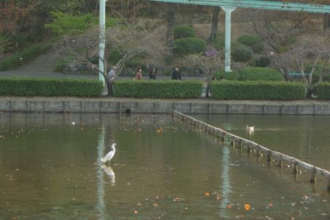 東山動物園の水鳥の写真
