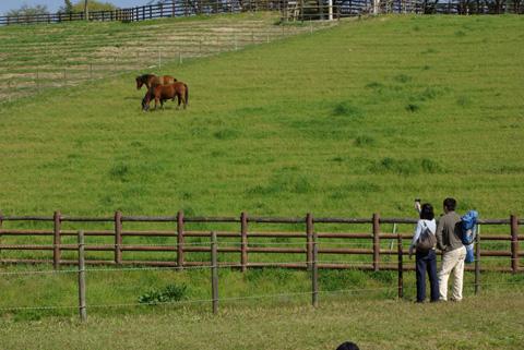 鞍ヶ池のこと(馬と夫婦)