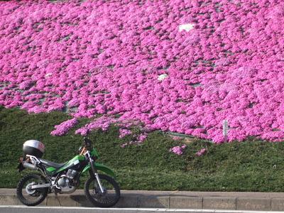 バイクで花見は最高☆彡