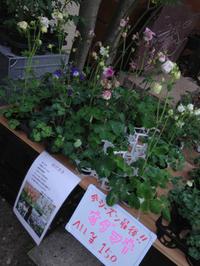 夢農人マルシェで春をいっただきまぁす♬ 2013/04/21 09:41:48
