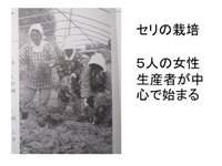 松平の七草の歴史