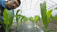 とうもろこしと枝豆の栽培をはじめています。