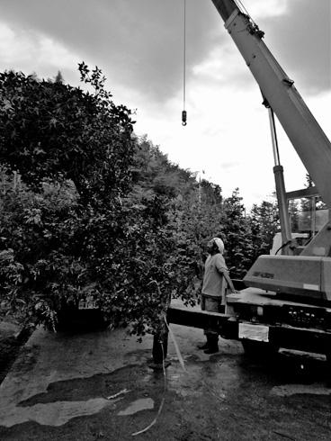 Project ‐ NIWA VOL.2(樹木狩り)
