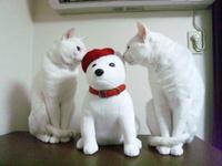 お父さん犬とジ~桃(=^・^=)