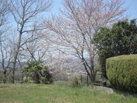 桜畑に認定!