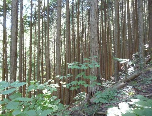 森を歩く講座にエントリーしたわけ #1