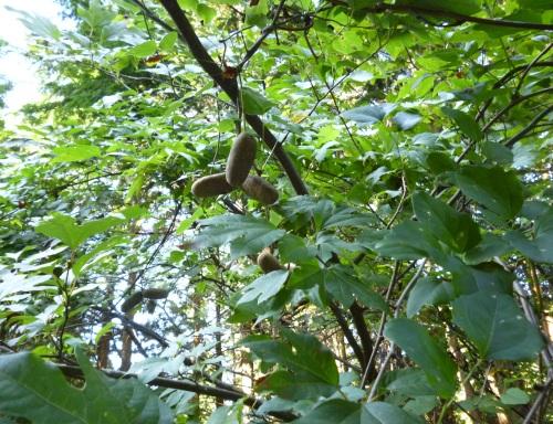 森を歩く講座にエントリーしたわけ #2