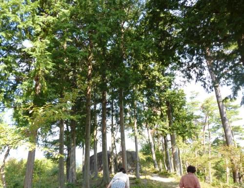 『矢作川源流の森を歩こう』 計三回の講座を終えて