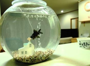 インテリア金魚「和み金魚」シリーズ第1弾『恋する♡デメキン』の新商品展開・粟久金魚の杉田さん