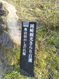 【奥山田のしだれ桜】岡崎観光きらり百選 NO.90  天然記念物