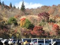 愛知県と長野県の県境にある茶臼山に紅葉を見に行ってきました。