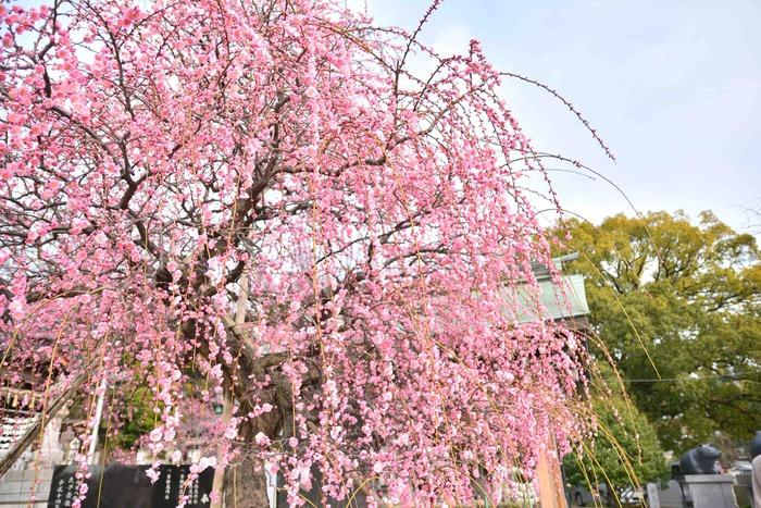 春〜初夏あれこれ(その1)
