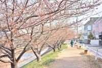 春〜初夏あれこれ(その2)