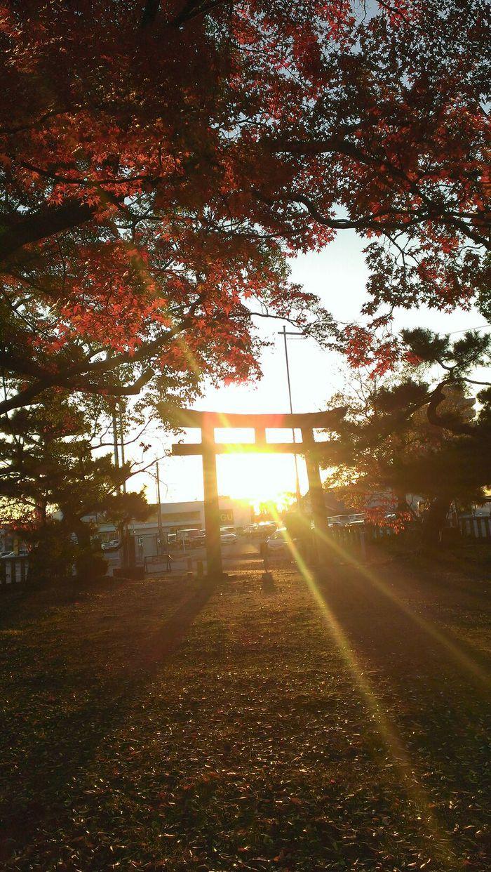 鳥居の中の夕陽