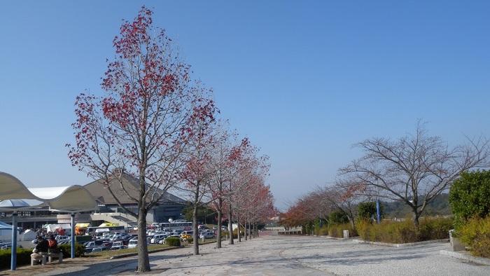 中央総合公園の秋・2013